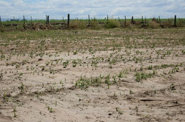 Declaran la emergencia agropecuaria en Entre Ríos por las sequías