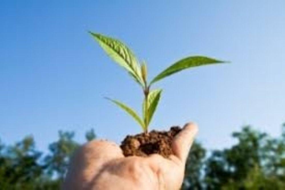 Lanzan diplomatura en desarrollo ambiental sustentable